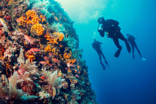 Divers undertaking a certification course at Kokomo Private Island Fiji